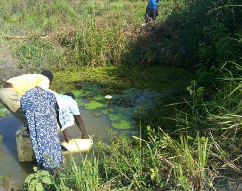 Lwala swamp-Alternative water source for Angorom water users.